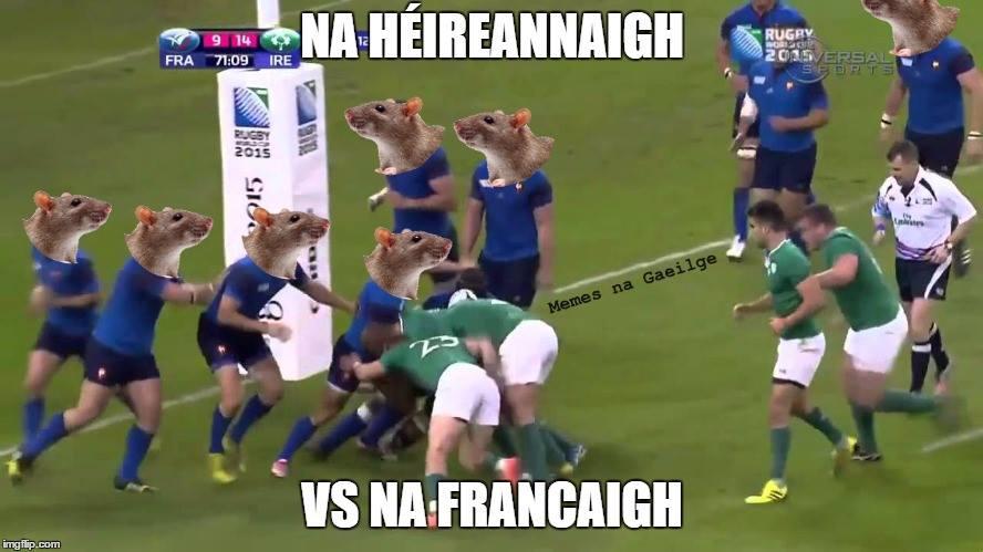 Meme Gaeilge Na hÉireannaigh Vs na francaigh #irfu #coybig #rugbaí